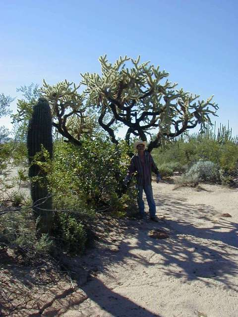 Giant Cholla