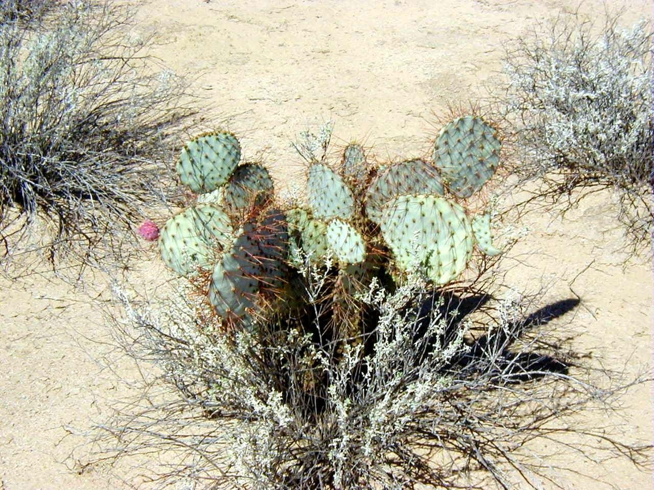 Lista de semillas para cambiar for Semillas de cactus chile
